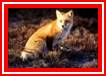Red Fox Realty, Inc.